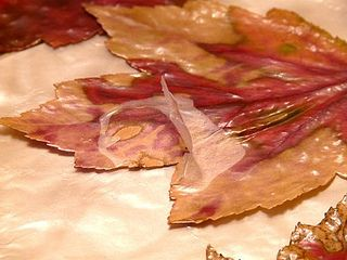 Fall Leaves:Mods Podge: Food Coloring by gingerbread_snowflakes, via Flickr