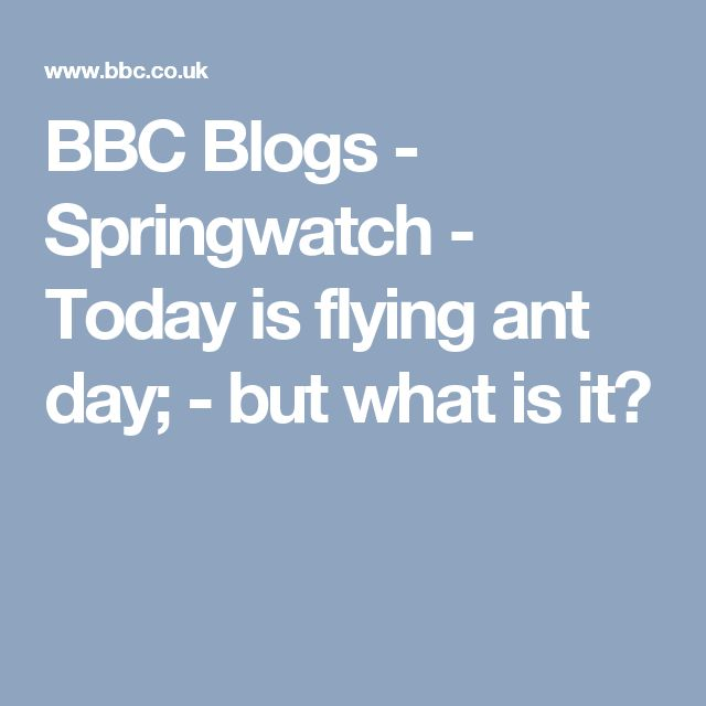 BBC Blogs - Springwatch - Today is flying ant day; - but what is it?