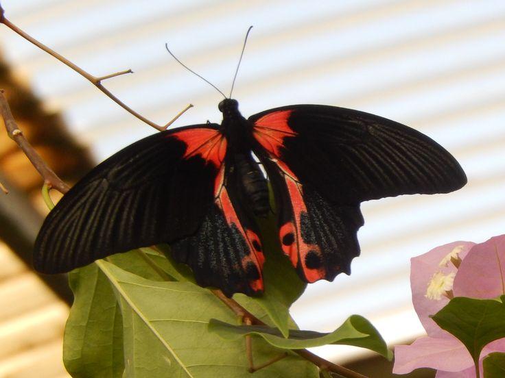 Butterfly world, near Paarl