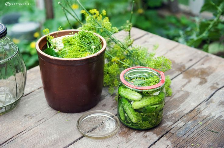 ogórki małosolne #dill cucumbers / przepis na #kiszone ogórki