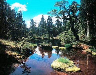 *** PARQUE NACIONAL HORNOPIRÉN <<< Excelente !!   CHILE   reportajes   Parque Nacional Hornopirén