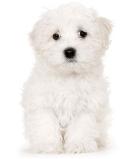 We would love to help you with your puppy training requirements.