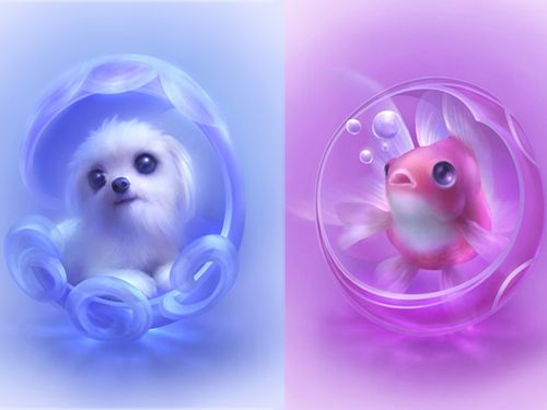 17 best images about animal screensavers the bubble the - Free funny animal screensavers ...