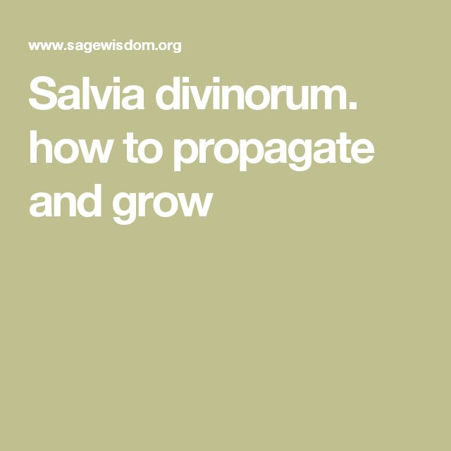 Salvia divinorum. how to propagate and grow