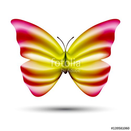 Vector: abstract vector butterfly isolated on white background