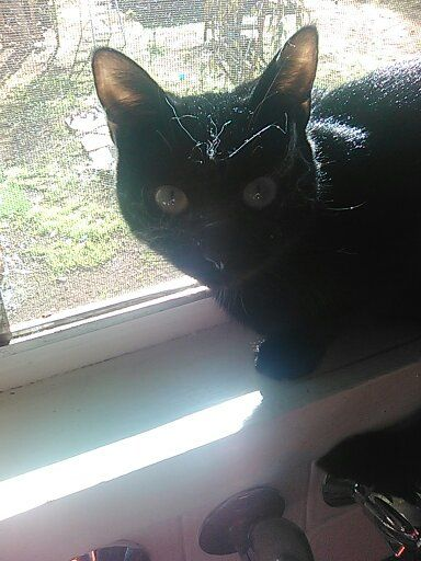 lol, Mildred with cobwebs xo sitting on kitchen window sill in the sun