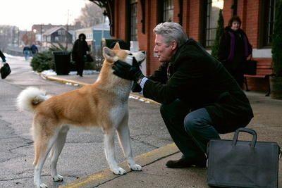 """HACHIKO - EINE WUNDERBARE FREUNDSCHAFT: von Lasse Hallström, mit Richard Gere und Joan Allen - """"Als Professor Parker eines Tages nach der Arbeit einen herrenlosen Hundewelpen am Bahnhof findet, ahnt er noch nicht, dass dies der Beginn einer ganz besonderen Freundschaft ist. Während seine Frau den kleinen japanischen Akita-Hund sehr zögerlich aufnimmt, wird Parkers Herz von Hachiko im Sturm erobert. Schon bald begleitet ihn der aufgeweckte Hachiko jeden Tag zum Bahnhof und holt ihn am Abend…"""