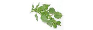 Tudod-e melyik a legjobb méregtelenítő gyógynövény?