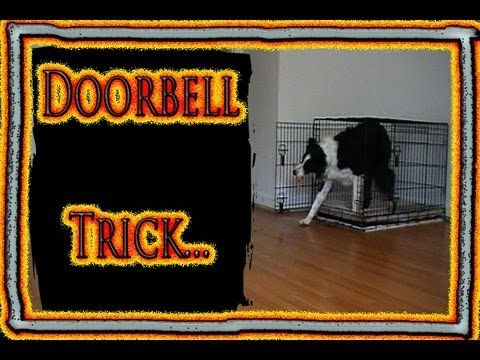 125 best dog tricks images on pinterest dog training training useful dog trick prevent barking at the doorbell by training a new tricks fandeluxe Epub