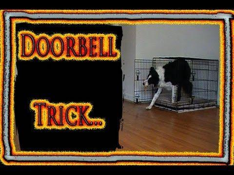 Useful Dog Trick... Prevent barking at the doorbell by training a new tricks instead.  Pam's Dog Academy Pamela Johnson San Diego CA www.pamsdogtraining.com