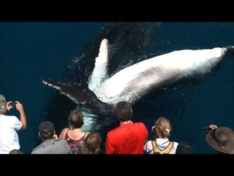 VIDEO: Guide to #WhaleWatching in Hervey Bay