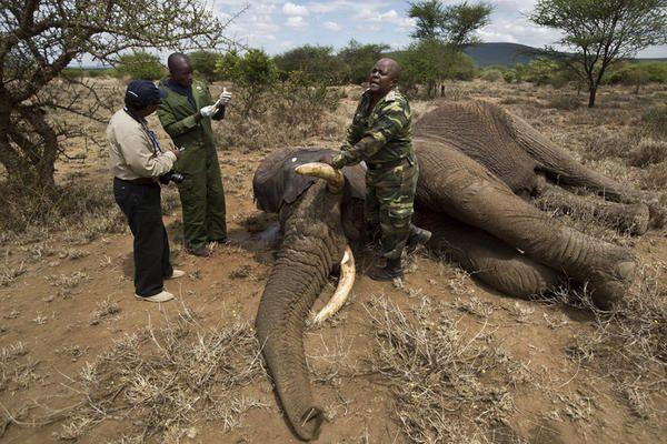 Despite severe poaching, hopeful signs on World Elephant Day - CSMonitor.com
