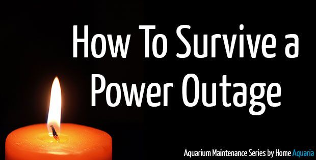 The worse thing that can happen to any home aquarium is a power outage. Whether it is an hour or multiple days, it can create havoc and possibly kill your fish if the correct steps are not taken during a power failure. This might even have a beginner hobbyist think that having an aquarium is ...read more