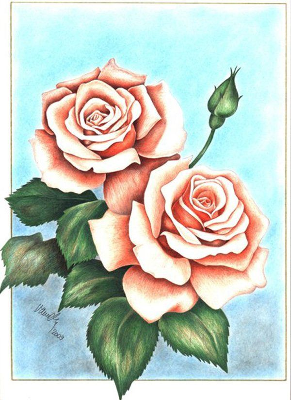 22. Violet Vendor – Roses - Depiction of Roses executed with colored pencils.
