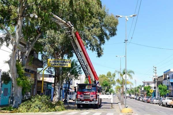 Avanzan los trabajos de forestación y parquización en la zona este de San Fernando