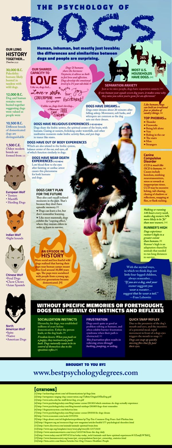 What's in a Dog's Mind Info-Graph What's in a dog's mind? That has been the age old question that man has had about the lovable canine. #dogs