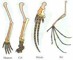 Charles Darwin Theory of Evolution | DARWIN'S THEORY OF EVOLUTION DEBUNKED