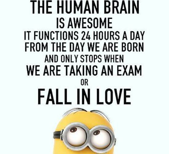 25+ best Exam funny quotes on Pinterest | Exam quotes ...