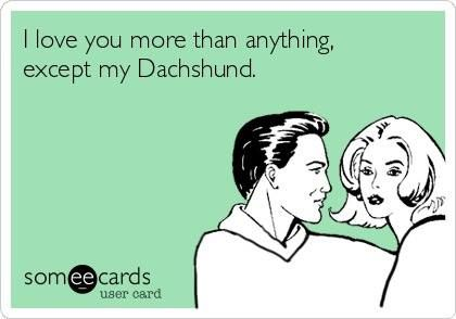 """I love you more than anything, except my Dachshund."" ~ That's the spirit! =D"