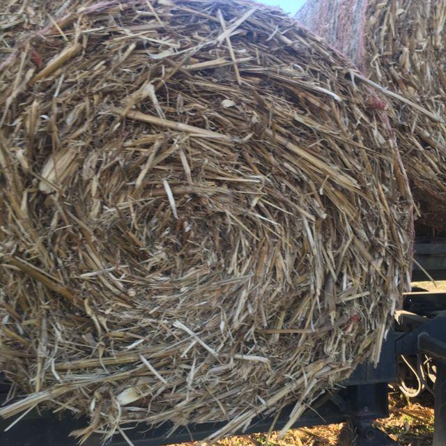 Hay For sale in lebanon, tn: Corn Stalks Round Bales
