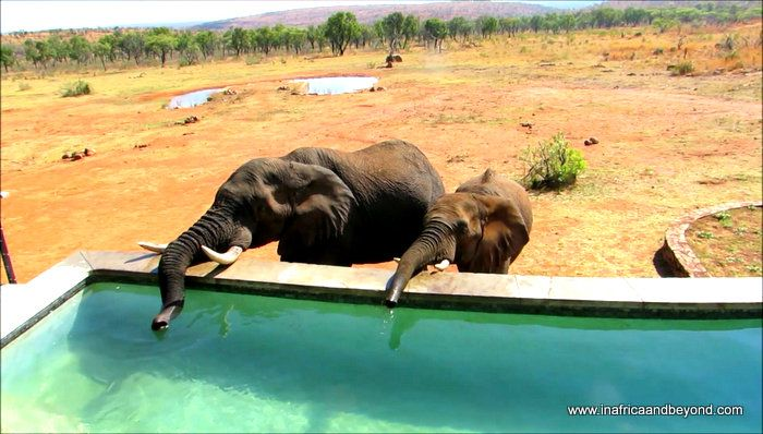 The Dutch-owned Mhondoro Game Lodge is situated in the malaria-free, Big Five, Welgevonden Game Reserve in Limpopo,
