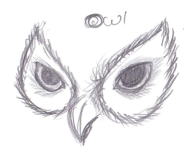 Owl Eyes Drawing | Microsoft Windows Photo Gallery 6.0.6001.18000