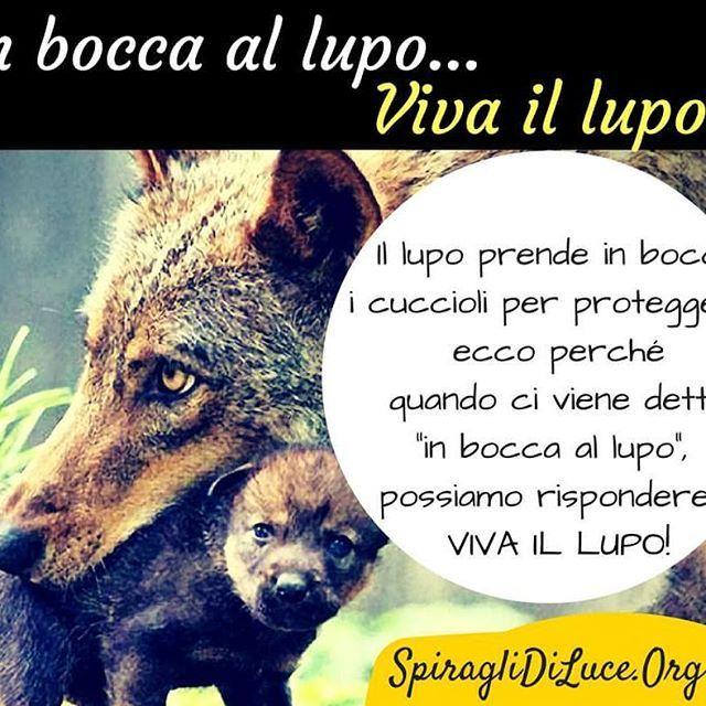 In bocca al lupo? Viva il lupo #inboccaallupo #vivaillupo #lupo #detti #proverbi #auguri #instamood #instadaily #instagram #instagood #infographic #spiraglidiluce #yoga #blog #meditazione #crescitapersonale #bellezza #sabatosera #buonaserata #abbracci #amore :-D