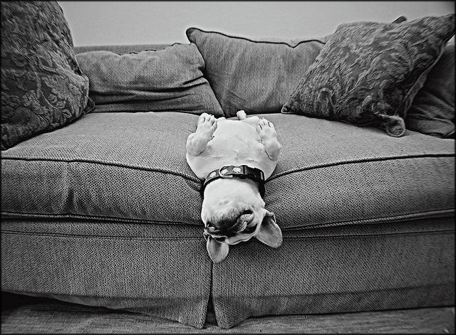 Smiles.: Happy Baby, French Bulldogs Puppies, French Baby, The Edge, Cute Pet, Lazy Sunday, Baby Dogs, Naps Time, Sweet Dreams