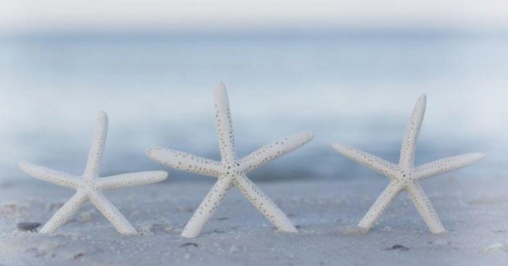 Három hófehér tengericsillag | Femcafe