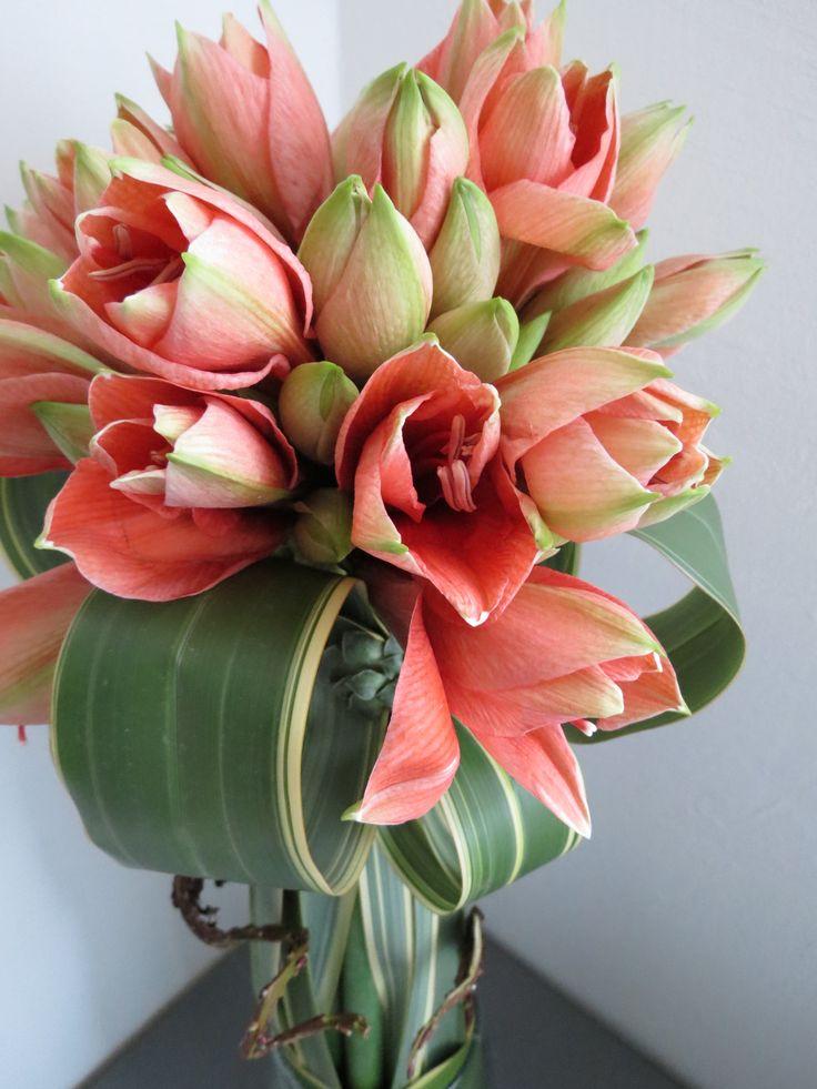 44 best amaryllis images on pinterest flower for Bouquet amaryllis