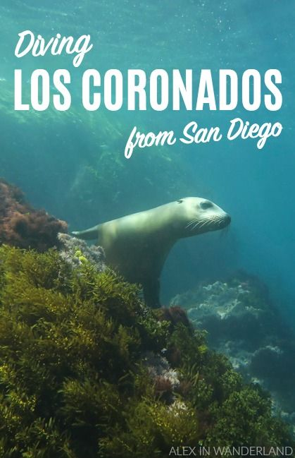 A trip to Los Coronados, a group of small uninhabited islands on the Mexico side of the Pacific, was a perfect dive from San Diego where we got to swim with happy seals who playfully danced for our cameras!