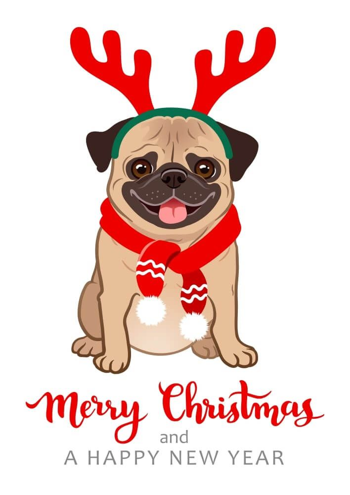 Pug Cards Things Are Looking Up ~ Fawn /& Black Pugs