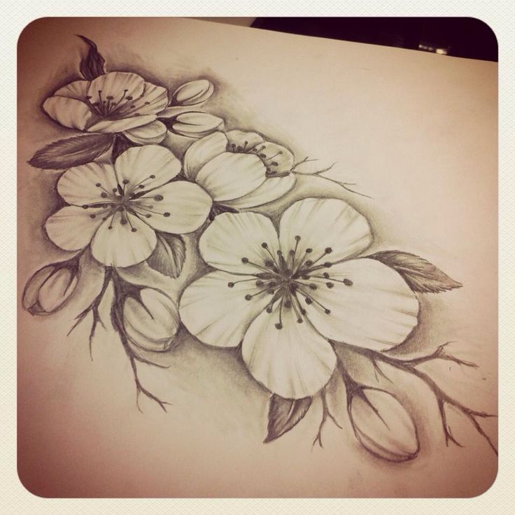 84 Best Images About Flower Drawings On Pinterest