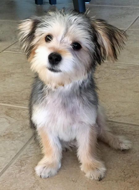 maltese jack russell terrier mix 25 best ideas about terrier mix on pinterest terrier 2889