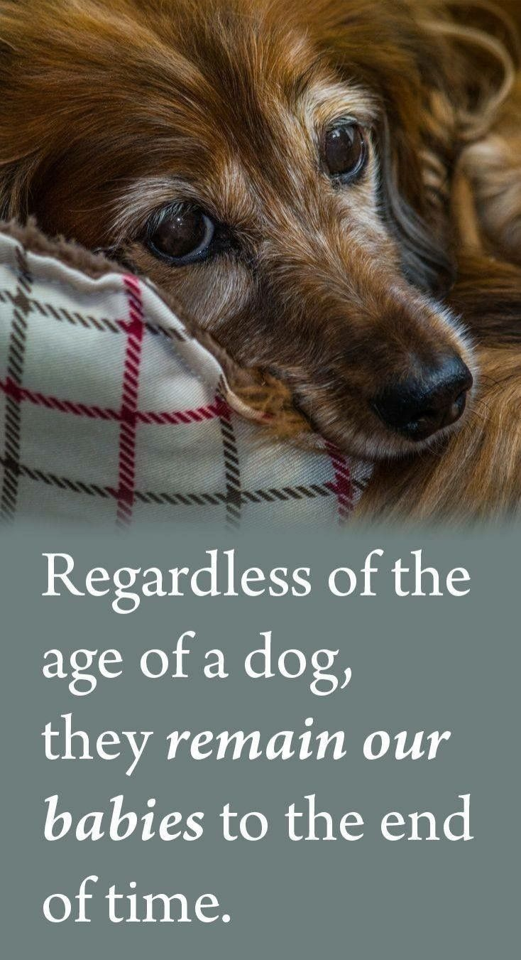 Pin By Zen Frequency On Dog Quotes Dog Quotes Dog Love Dogs