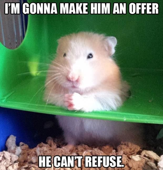Best Animal Rodent Hamster Images On Pinterest Hamster - Hamster bartenders cutest thing youve ever seen