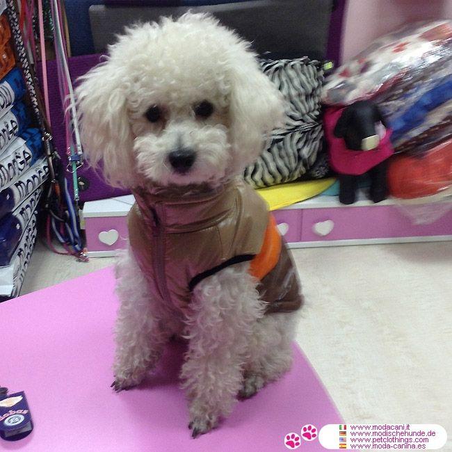 Hundemantel Fleece in Braun für kleine Hunde #Hunde #Pudel - Braun Wasserdichte Hundemantel für kleine Hunde (Chihuahua, Pudel,..), mit dem Rücken in 3 Farben und innen mit Fleece gefüttert; ohne Kapuze