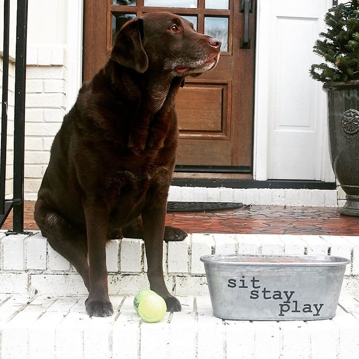 A Southern Bucket Sit Stay Play Dog Toys Galvanized Tub