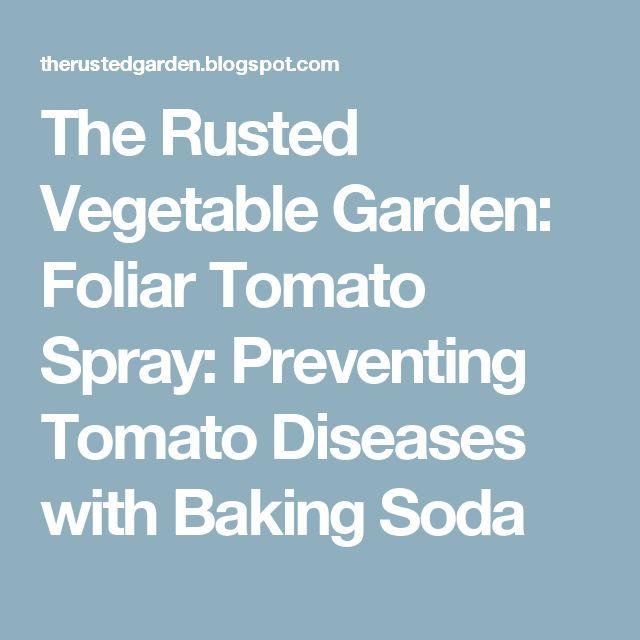 The Rusted Vegetable Garden: Foliar Tomato Spray: Preventing Tomato Diseases with Baking Soda