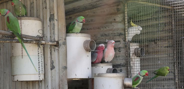 PVC bird nest boxes, outlasting wooden ones, mice can not climb in or out.