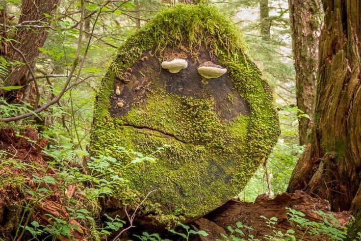 Log Face Photo - Visual Hunt