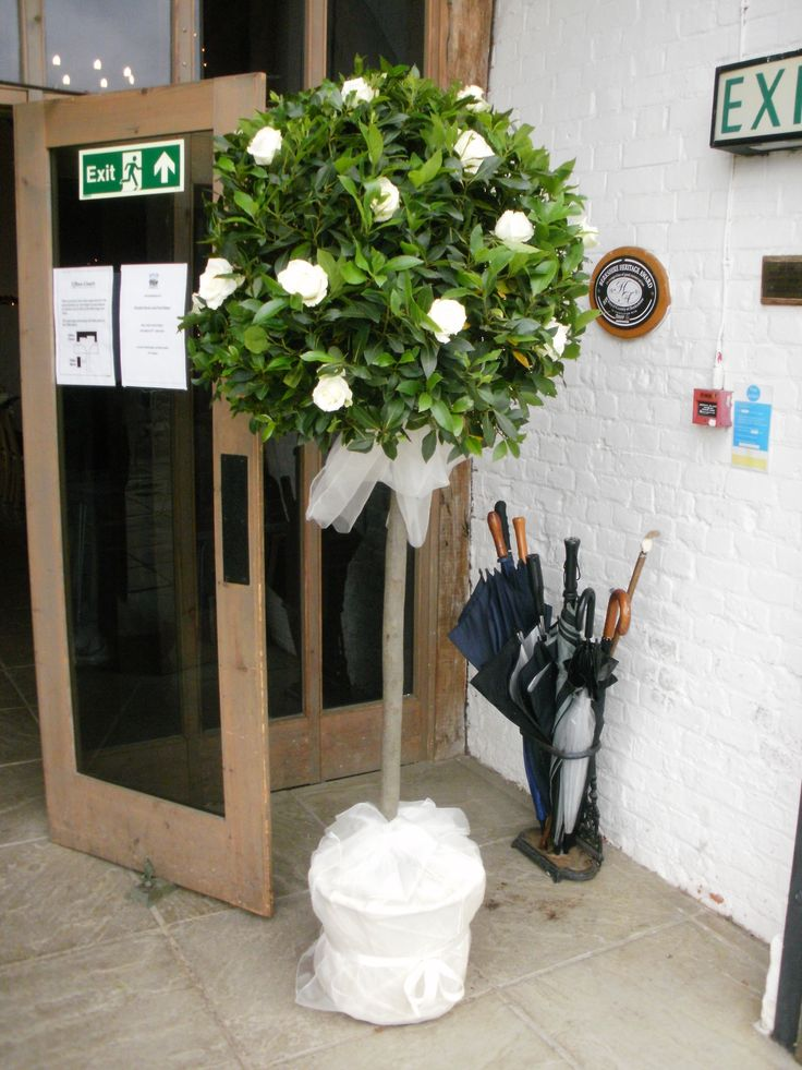 Topiary Tree With White Roses Wedding Venue Flowers