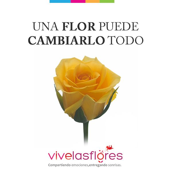 En #SanValentín las mejores flores para ti: #Rosas y #Alstroemerias