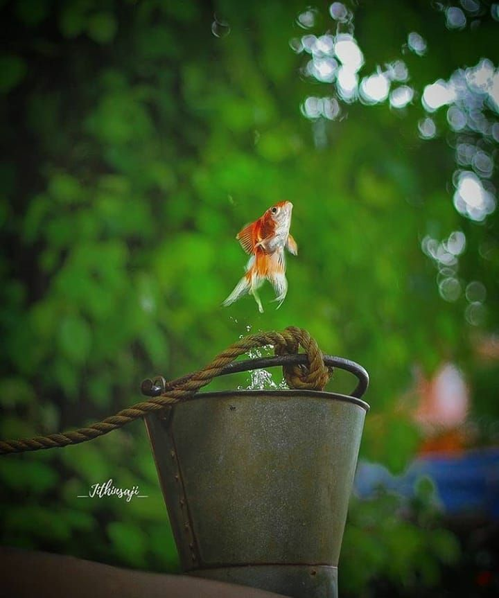 Image May Contain Plant Flower Outdoor And Nature Creative