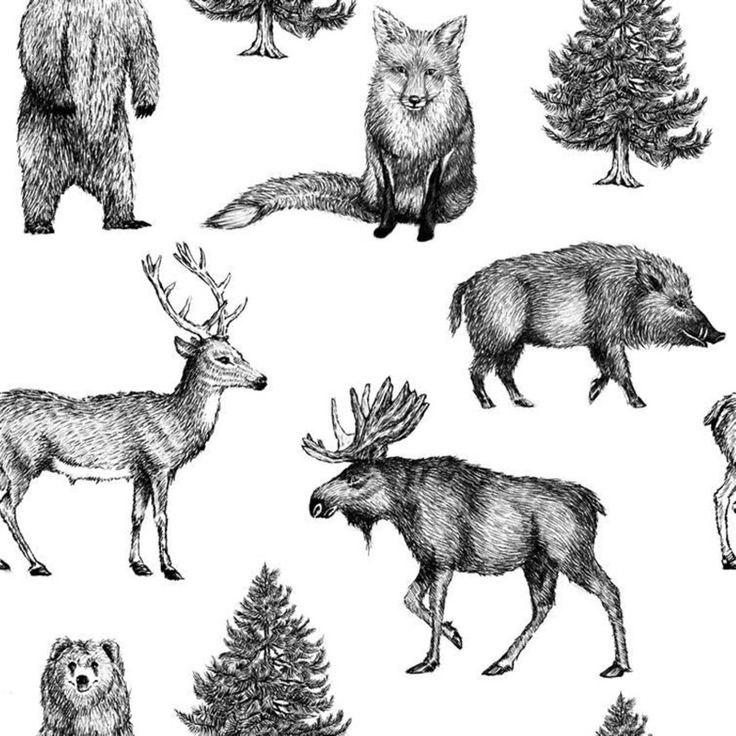 Tapet med konungarna i den svenska skogen Tapet med bilder på de magnifika djuren man kan hitta i Sveriges skogar. Passar perfekt i t.ex. sommarstugan ell