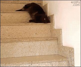 Chat glisse