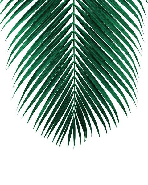 Jungle Style Decor Leah