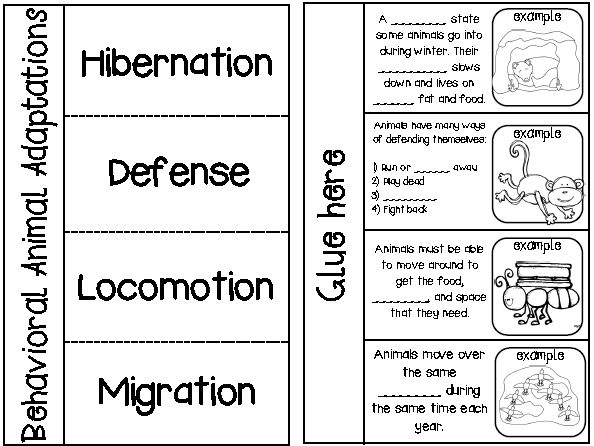 Printables Animal Adaptations Worksheets 1000 ideas about animal adaptations on pinterest food webs idioms and behavioral adaptations