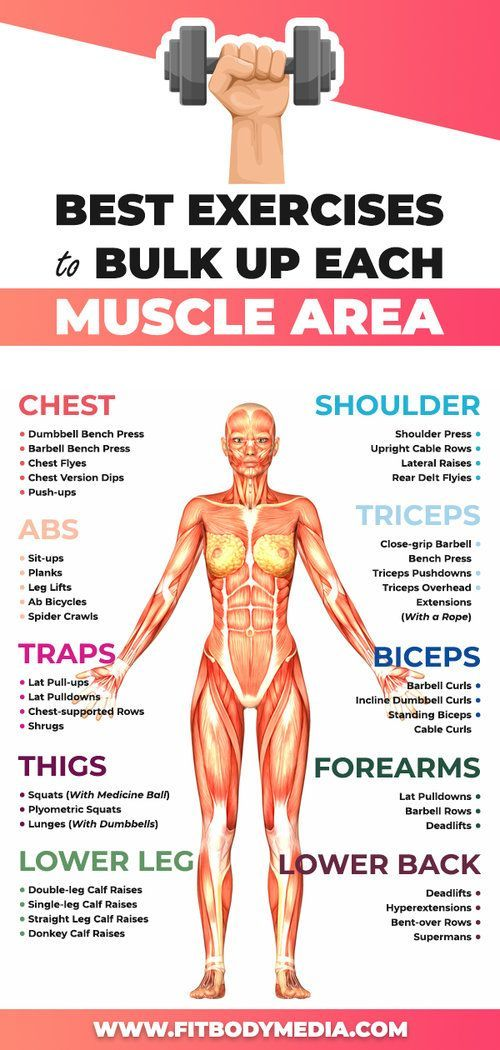 10 Types Of Muscles That You Can Bulk Up When you…