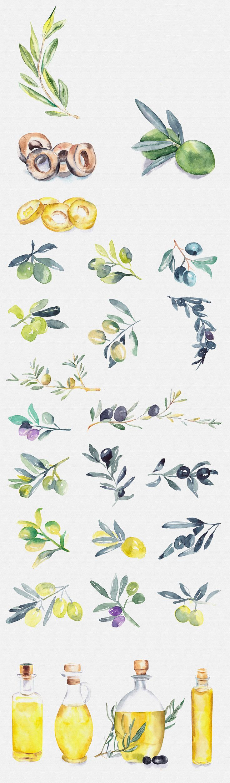 Herbs watercolour illustrations - The Digital Designer's Artistic Toolkit